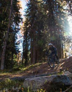 Mountainbikerin Wald